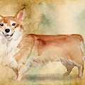 Welsh Corgi by John Edwards