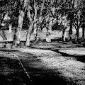 West End Park by Jeremy Lavender Photography