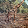 What Are The Looking At? Giraffes by Alan M Hunt