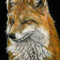 What Does The Fox Say? by William Underwood