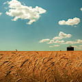 Wheat, Sky And Bin by Todd Klassy