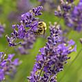 Where's The Honey by Kristopher Schoenleber