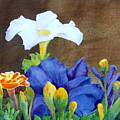 White And Purple Petunia And Marigolds by Robert Burns