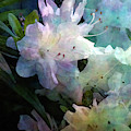 White Azaleas 6511 Idp_2 by Steven Ward