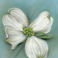 White Dogwood With Leaf by MM Anderson