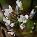 White Flower Macro by Scott Lyons