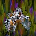 White Iris Dance #i8 by Leif Sohlman