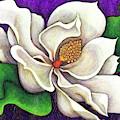 White Magnolia by Amy E Fraser