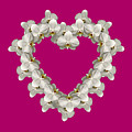 White Orchid Floral Heart Love And Romance by Rose Santuci-Sofranko