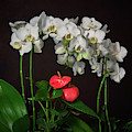 White Phalaenopsis Orchids And Anthurium by TL Mair