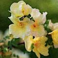 Yellow Rose - Patiently Waiting- By Omaste Witkowski by Omaste Witkowski