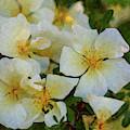 White Rose - Wedding Party- By Omaste Witkowski by Omaste Witkowski