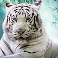 White Tiger Headshot by SR Green