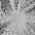 White Winter Wonderland  by Rand