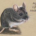 Wild Deer Mouse by Twyla Francois