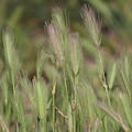 Wild Grass In Sage And Pink Lemonade by Colleen Cornelius