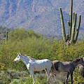 Wild Horses Tonto National Forest by Edward Fielding