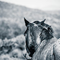 Wild Mustang Tonto National Park Arizona by Edward Fielding