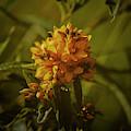 Wild Yellow #i9 by Leif Sohlman