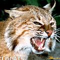 Wildcats Mascot 4 by Larry Allan
