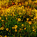 Wildflower Abstract by Endre Balogh