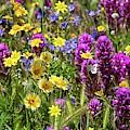Wildflower Souffle by Lynn Bauer