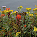 Wildflowers By The Sea by Marie Leslie
