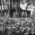 Wildflowers In The Country Black And White  by Debra and Dave Vanderlaan