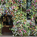 Wildflowers On The Ivy Kings Road London by Tim Gainey