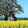 Willamette Valley Spring Crop by Jerry Sodorff