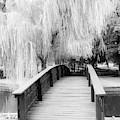 Willow Tree Over The Bridge by Terri Morris