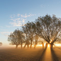 Willows by Arterra Picture Library