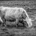 Windblown In Scotland Black And White by Debra and Dave Vanderlaan