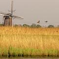 Windmill In A Golden Field by Wolfgang Stocker