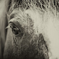 Window To The Soul by Dale Powell