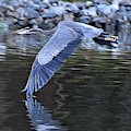 Wing Touching Water by Kim Bemis