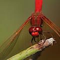 Winged Hunter by Robert Potts