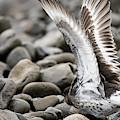 Wingspan by Robert Potts