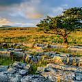 Winskill Stones Limestone Pavement by David Ross