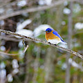 Winter Blue by Rockybranch Dreams
