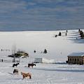 Winter Farm Washington by Tatiana Travelways