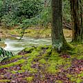 Winter Greens On Back Fork  by Thomas R Fletcher