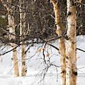 Winter In Canada by Alexander Fedin