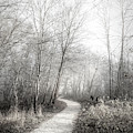 Winter Light In Black And White by Debra and Dave Vanderlaan
