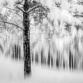Winter by Okan YILMAZ