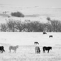 Winter Pasture by Jeff Phillippi