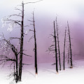 Winter Rhapsody by Karen Wiles
