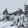 Winter Sentinel In Down East Maine by Marty Saccone