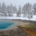 Winter Spring by David Andersen
