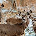 Winter Storm Deer by Steve Krull